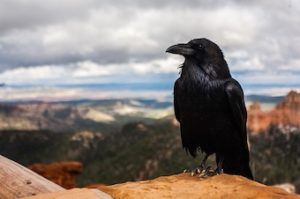 The Raven as symbol of death